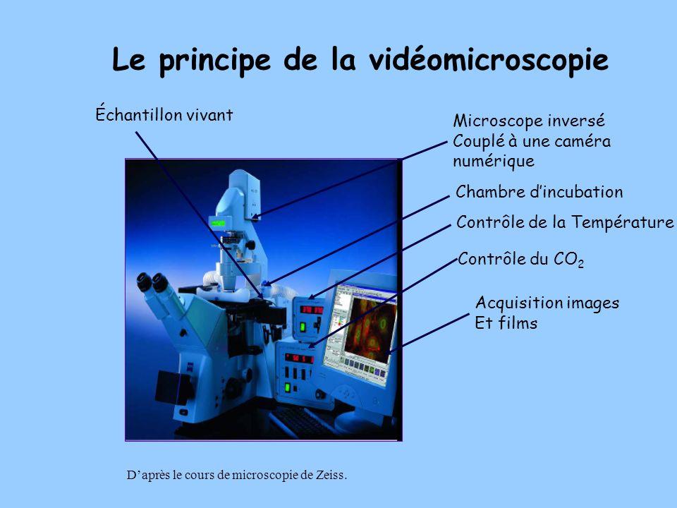 Le principe de la vidéomicroscopie Microscope inversé Couplé à une caméra numérique Échantillon vivant Chambre dincubation Contrôle de la Température