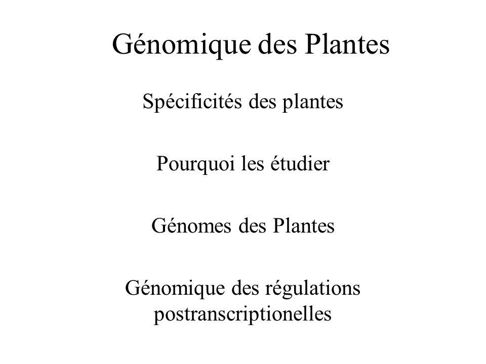 Génomique des Plantes Spécificités des plantes Pourquoi les étudier Génomes des Plantes Génomique des régulations postranscriptionelles