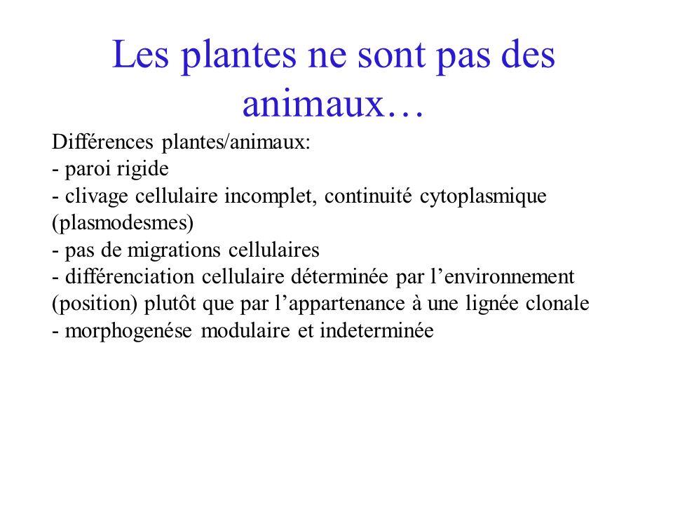 Les plantes ne sont pas des animaux… Différences plantes/animaux: - paroi rigide - clivage cellulaire incomplet, continuité cytoplasmique (plasmodesme