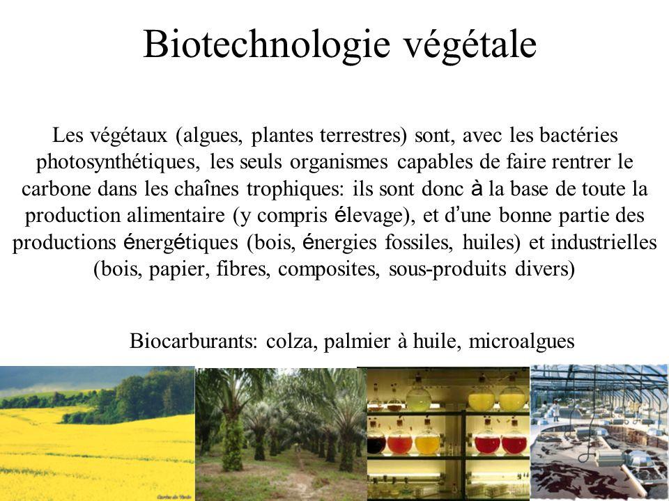 Biotechnologie végétale Les végétaux (algues, plantes terrestres) sont, avec les bactéries photosynthétiques, les seuls organismes capables de faire r