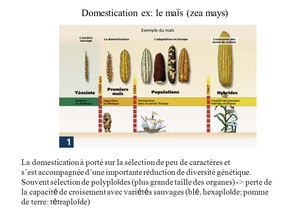 Domestication ex: le ma ï s (zea mays) La domestication à porté sur la sélection de peu de caractéres et sest accompagnée dune importante réduction de