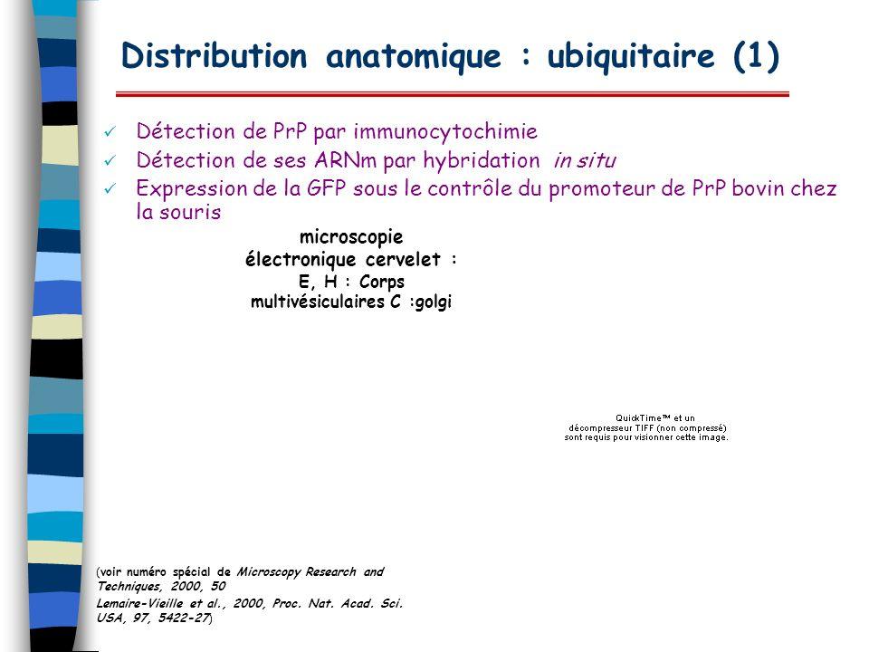 Distribution anatomique : ubiquitaire (1) Détection de PrP par immunocytochimie Détection de ses ARNm par hybridation in situ Expression de la GFP sou