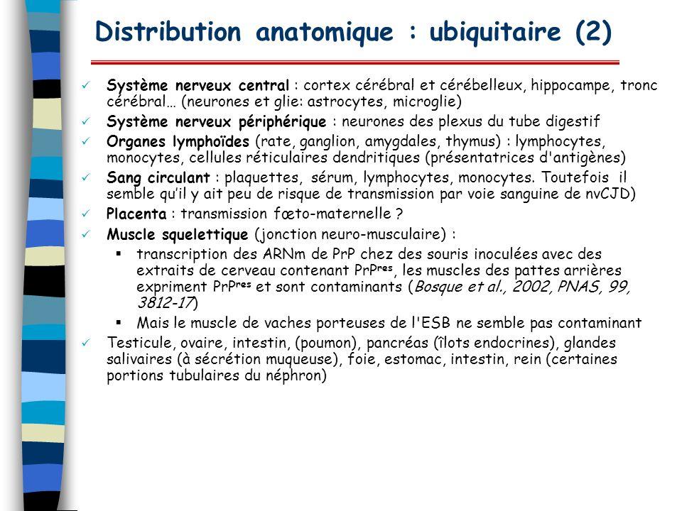 Distribution anatomique : ubiquitaire (2) Système nerveux central : cortex cérébral et cérébelleux, hippocampe, tronc cérébral… (neurones et glie: ast