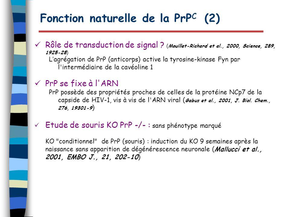 Fonction naturelle de la PrP C (2) Rôle de transduction de signal ? (Mouillet-Richard et al., 2000, Science, 289, 1925-28) Lagrégation de PrP (anticor