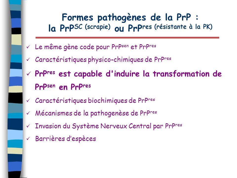 Formes pathogènes de la PrP : la PrP SC (scrapie) ou PrP res (résistante à la PK) Le même gène code pour PrP sen et PrP res Caractéristiques physico-c