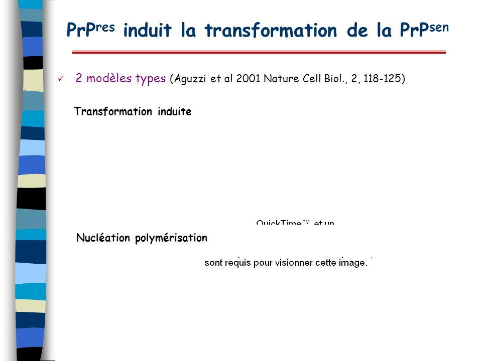 PrP res induit la transformation de la PrP sen 2 modèles types (Aguzzi et al 2001 Nature Cell Biol., 2, 118-125) Transformation induite Nucléation pol