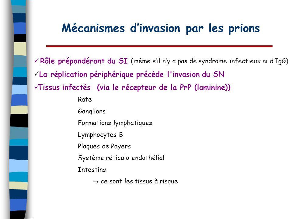 Mécanismes dinvasion par les prions Rôle prépondérant du SI ( même sil ny a pas de syndrome infectieux ni dIgG) La réplication périphérique précède l'
