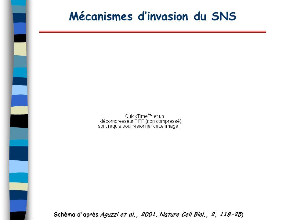 Mécanismes dinvasion du SNS Schéma d'après Aguzzi et al., 2001, Nature Cell Biol., 2, 118-25)