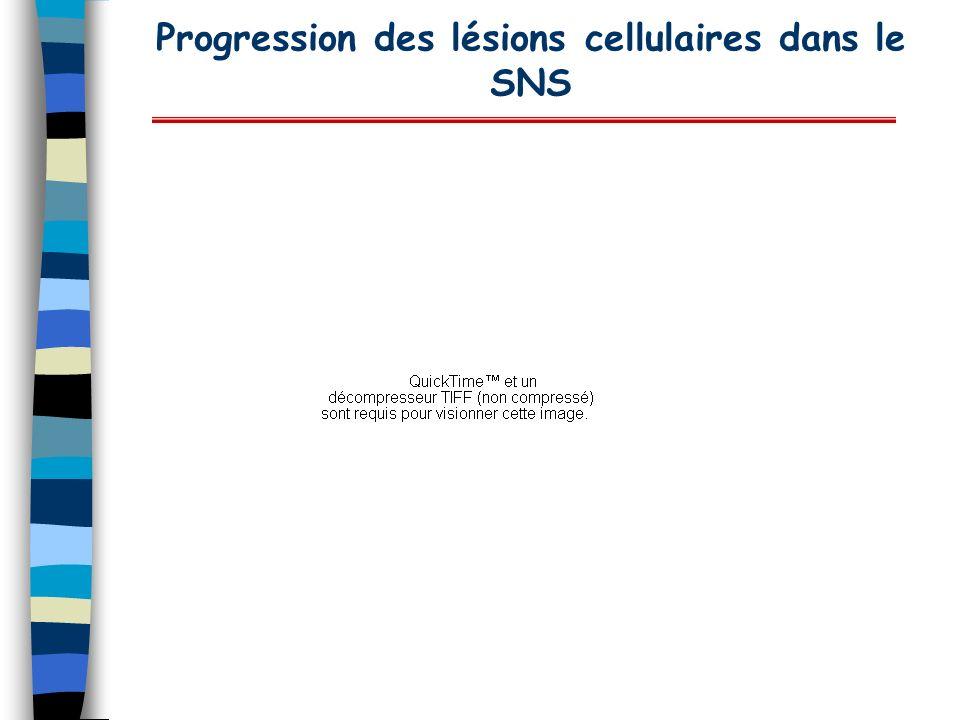 Progression des lésions cellulaires dans le SNS