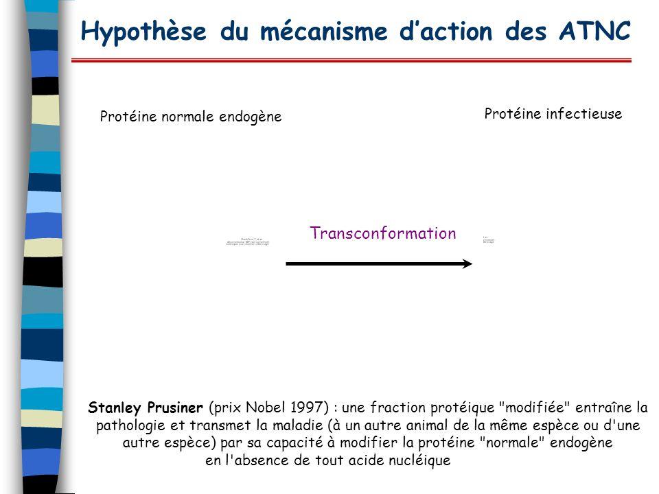 Hypothèse du mécanisme daction des ATNC Transconformation Stanley Prusiner (prix Nobel 1997) : une fraction protéique