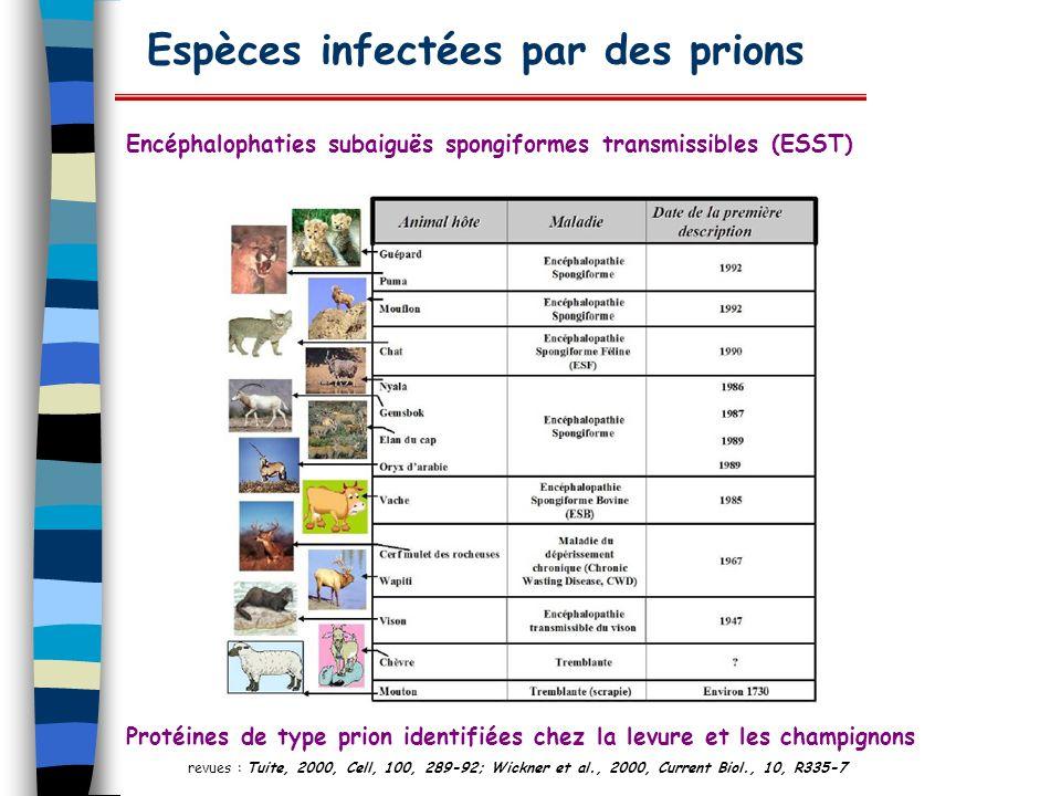 Espèces infectées par des prions Encéphalophaties subaiguës spongiformes transmissibles (ESST) Protéines de type prion identifiées chez la levure et l