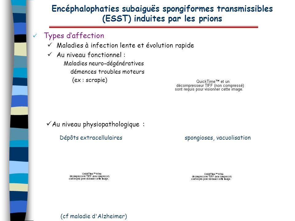 Encéphalophaties subaiguës spongiformes transmissibles (ESST) induites par les prions Types daffection Maladies à infection lente et évolution rapide
