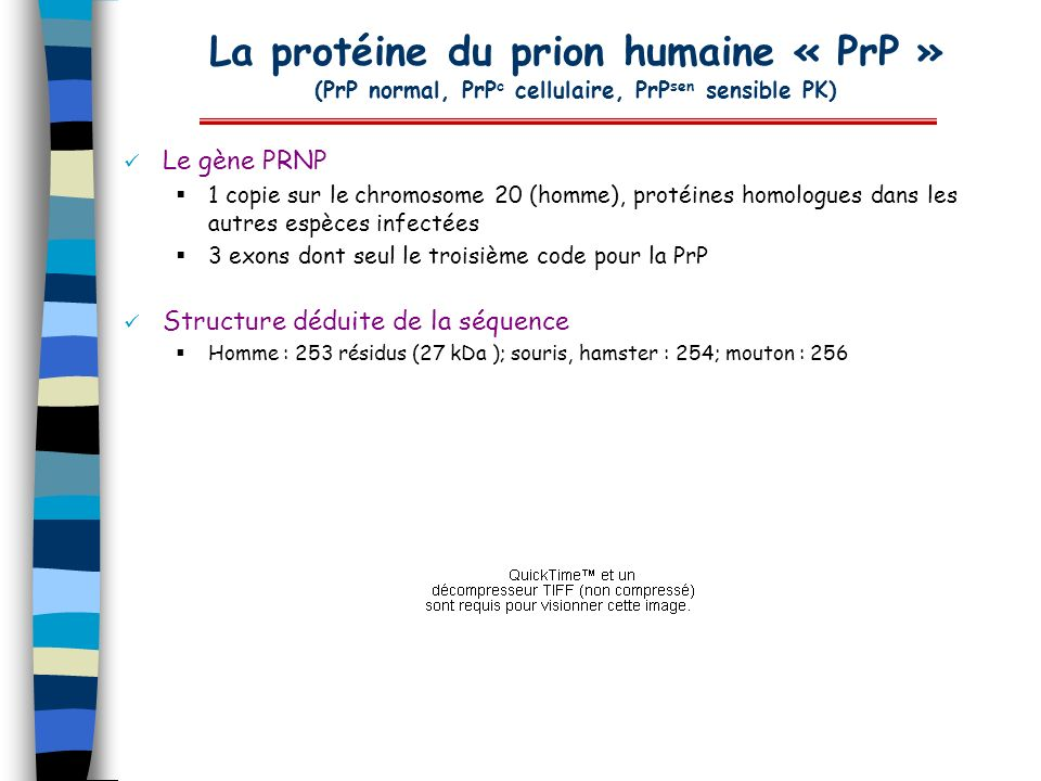 La protéine du prion humaine « PrP » (PrP normal, PrP c cellulaire, PrP sen sensible PK) Le gène PRNP 1 copie sur le chromosome 20 (homme), protéines