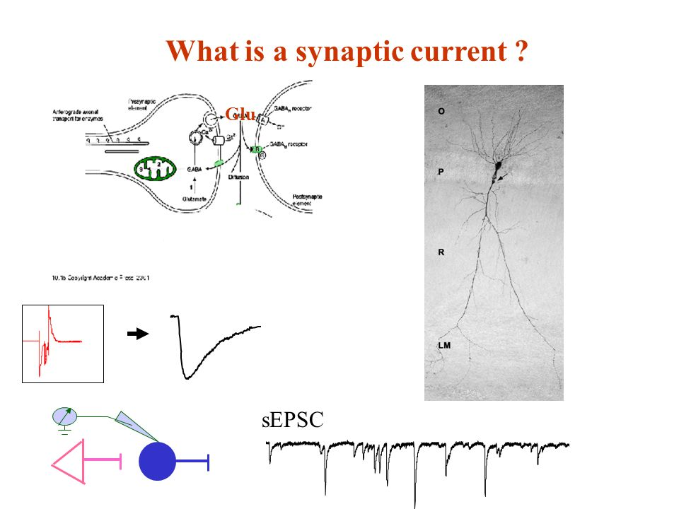 What is a synaptic current ? sEPSC Glu