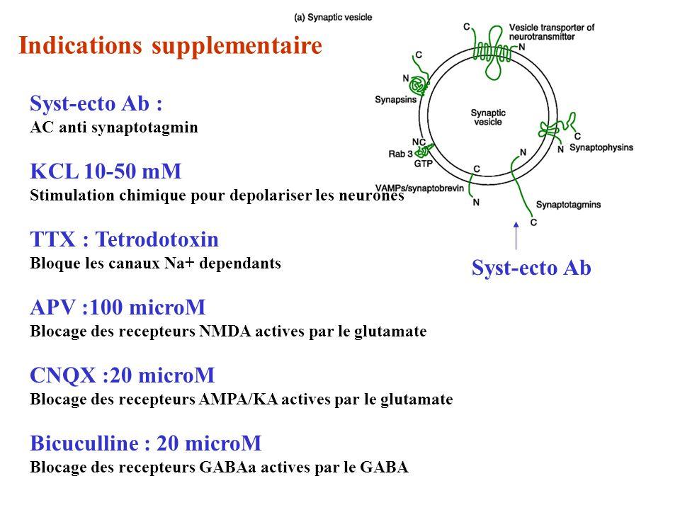 Syst-ecto Ab Syst-ecto Ab : AC anti synaptotagmin KCL 10-50 mM Stimulation chimique pour depolariser les neurones TTX : Tetrodotoxin Bloque les canaux Na+ dependants APV :100 microM Blocage des recepteurs NMDA actives par le glutamate CNQX :20 microM Blocage des recepteurs AMPA/KA actives par le glutamate Bicuculline : 20 microM Blocage des recepteurs GABAa actives par le GABA Indications supplementaire