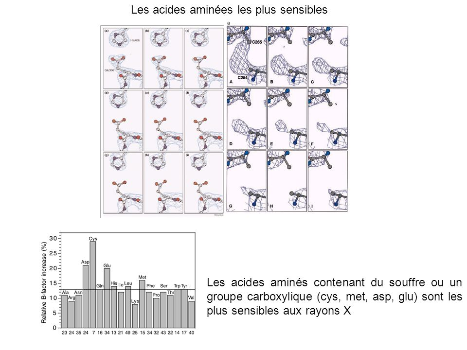 Les acides aminées les plus sensibles Les acides aminés contenant du souffre ou un groupe carboxylique (cys, met, asp, glu) sont les plus sensibles au