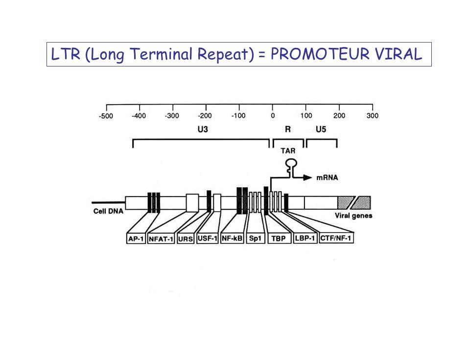 ADN Proviral ARNm génomique ARNm subgénomique monoépissé (ex: env) Expression par épissage alternatif de lARNm génomique
