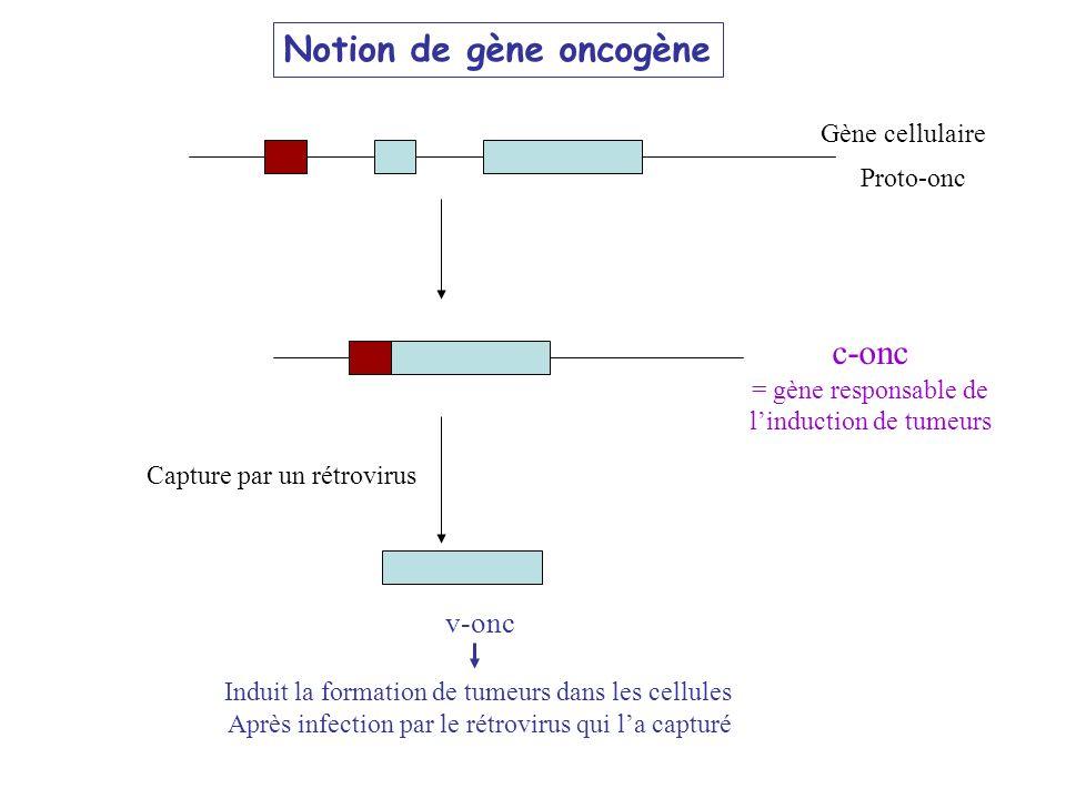 Proto-onc Gène cellulaire c-onc = gène responsable de linduction de tumeurs v-onc Induit la formation de tumeurs dans les cellules Après infection par