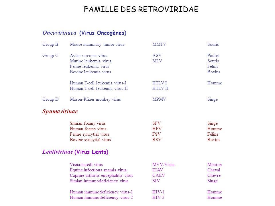 FAMILLE DES RETROVIRIDAE Oncovirinaea (Virus Oncogènes) Group B Mouse mammary tumor virusMMTV Souris Group C Avian sarcoma virusASV Poulet Murine leuk