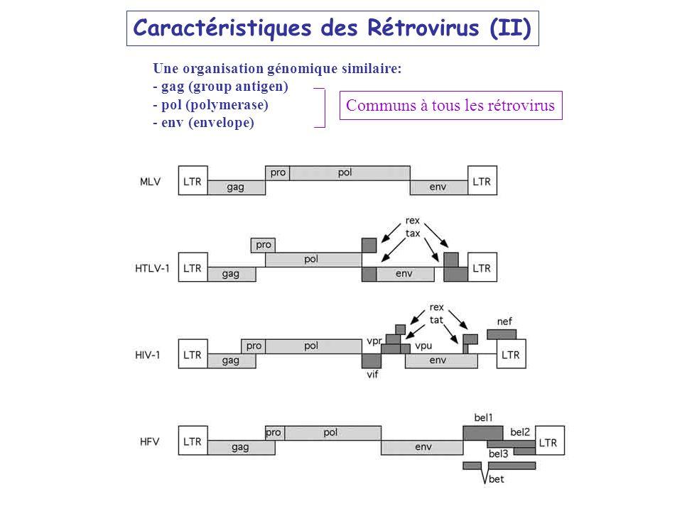 Caractéristiques des Rétrovirus (II) Une organisation génomique similaire: - gag (group antigen) - pol (polymerase) - env (envelope) Communs à tous le