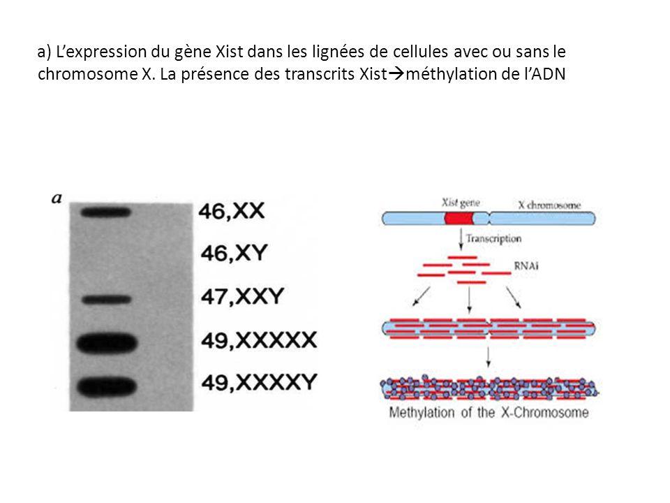 a) Lexpression du gène Xist dans les lignées de cellules avec ou sans le chromosome X. La présence des transcrits Xist méthylation de lADN