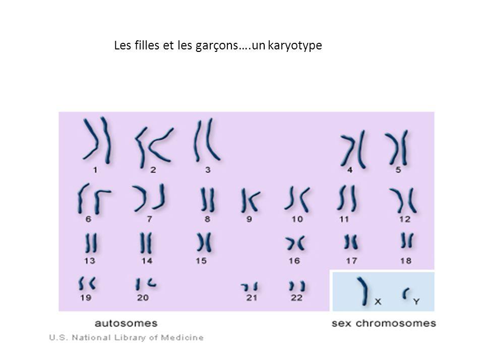 Les filles et les garçons….un karyotype