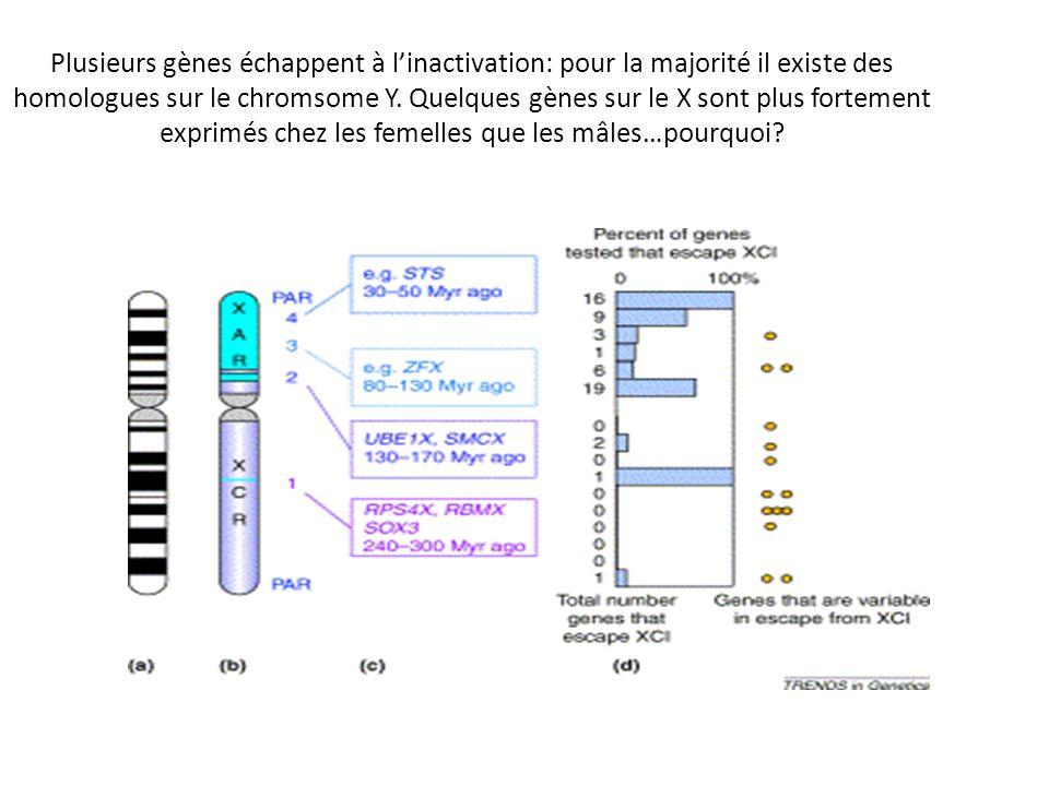Plusieurs gènes échappent à linactivation: pour la majorité il existe des homologues sur le chromsome Y. Quelques gènes sur le X sont plus fortement e
