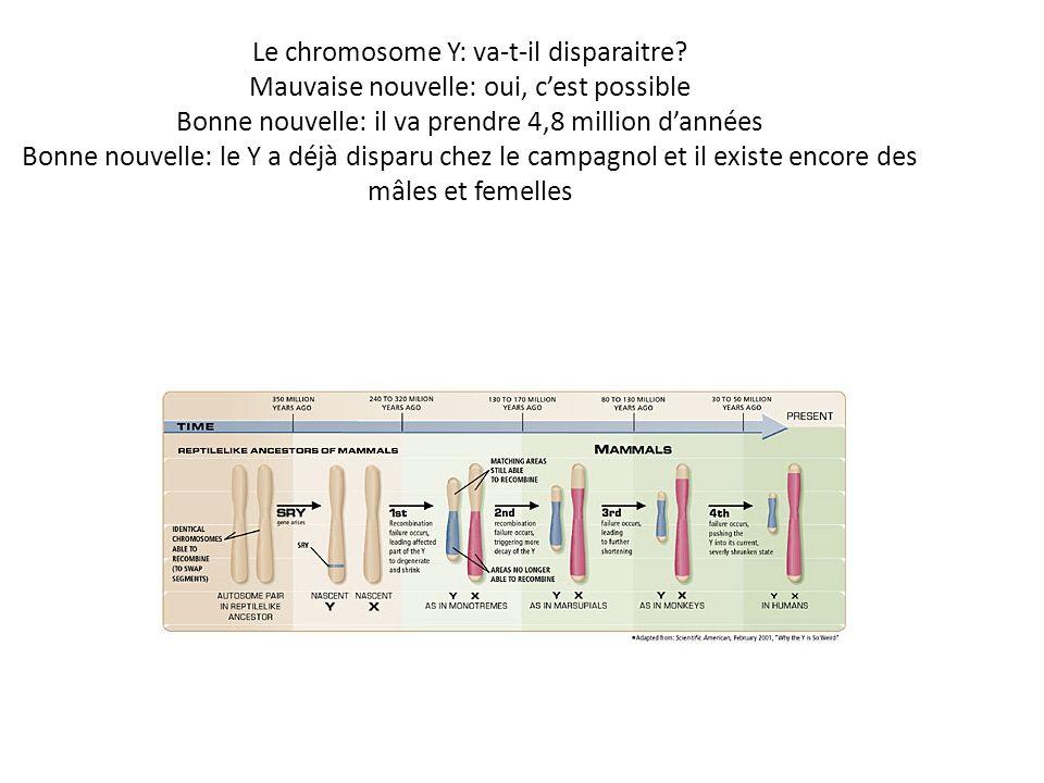 Le chromosome Y: va-t-il disparaitre? Mauvaise nouvelle: oui, cest possible Bonne nouvelle: il va prendre 4,8 million dannées Bonne nouvelle: le Y a d