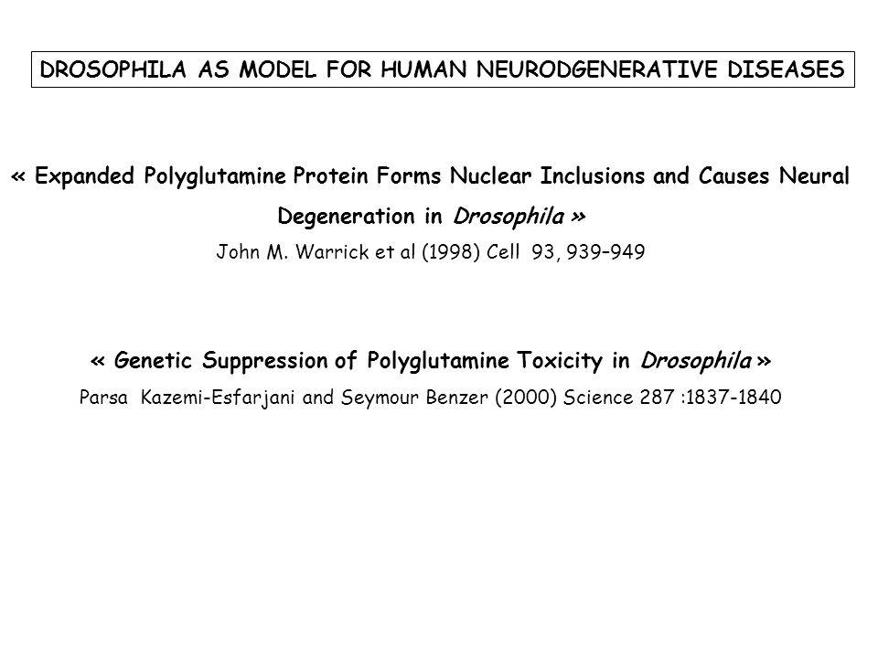 FIG 1 Expanded polyglutamine protein causes adult eye degeneration Elav-GAL4 UAS-Q78 (M)/+ 1 day old4 day old Elav-GAL4 UAS-Q27/+ 1 day old7day old gmr-GAL4 UAS-Q78 (W)/+ gmr-GAL4 UAS-Q27/+ Progressive Pigment degeneration Progressive Loss of photoreceptor morphology Neurones du système nerveux central et périphérique durant tout le développement Toutes les cellules de lœil en cours de développement ( cellules photoreceptrices et cellules pigmentaires)