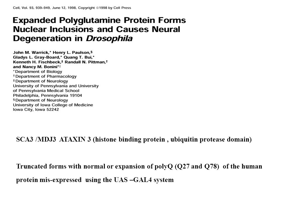 GAL 4 UASHsp 70 hemagglutin (HA)- tag 20 ou 127 CAGs UAS 20Q UAS 127 Q GMR GAL4 Eye specific