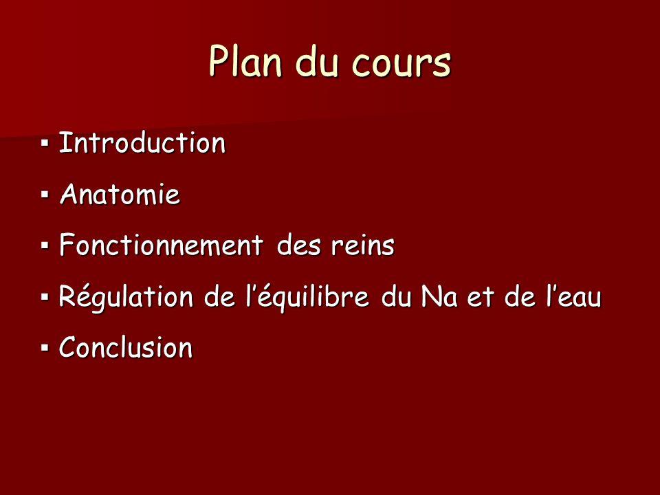 Plan du cours Introduction Introduction Anatomie Anatomie Fonctionnement des reins Fonctionnement des reins Régulation de léquilibre du Na et de leau