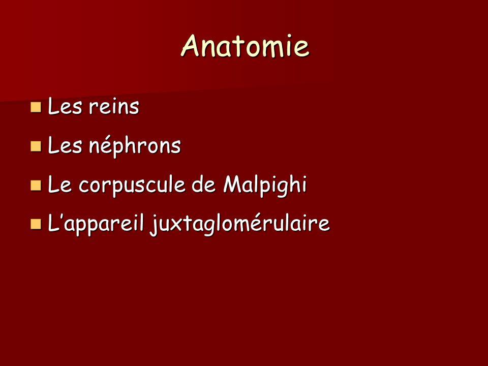 Anatomie Les reins Les reins Les néphrons Les néphrons Le corpuscule de Malpighi Le corpuscule de Malpighi Lappareil juxtaglomérulaire Lappareil juxta