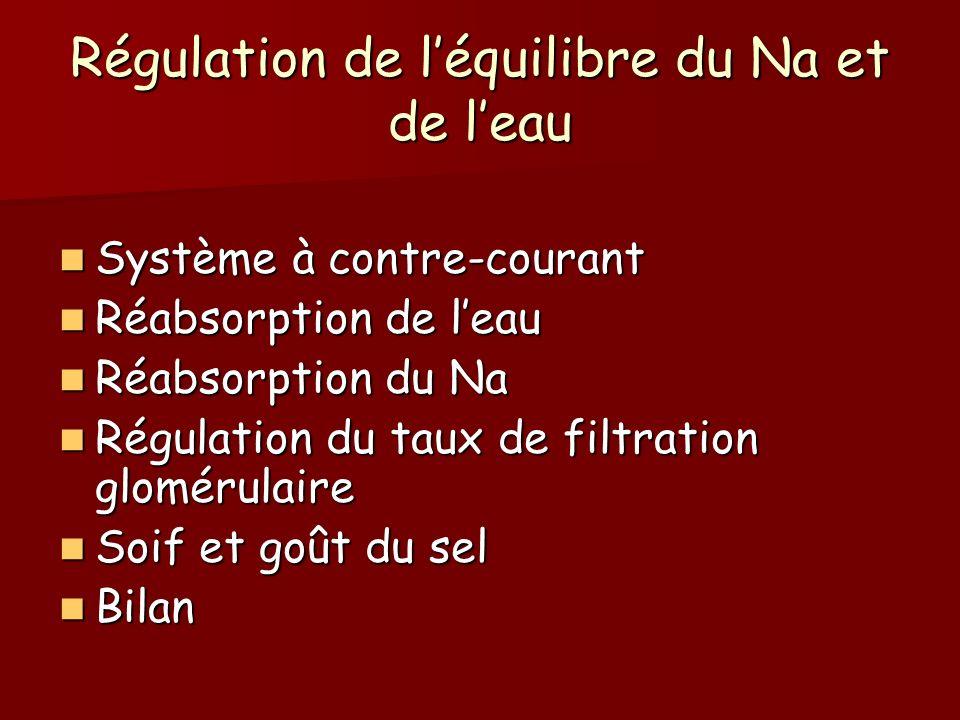 Régulation de léquilibre du Na et de leau Système à contre-courant Système à contre-courant Réabsorption de leau Réabsorption de leau Réabsorption du