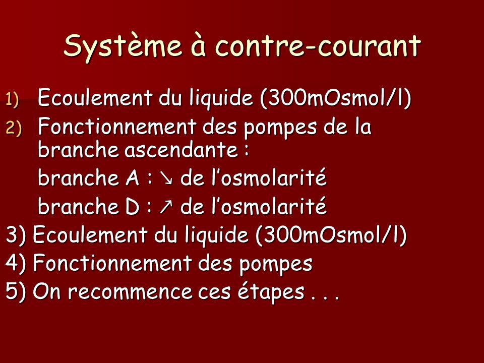 1) Ecoulement du liquide (300mOsmol/l) 2) Fonctionnement des pompes de la branche ascendante : branche A : de losmolarité branche D : de losmolarité 3