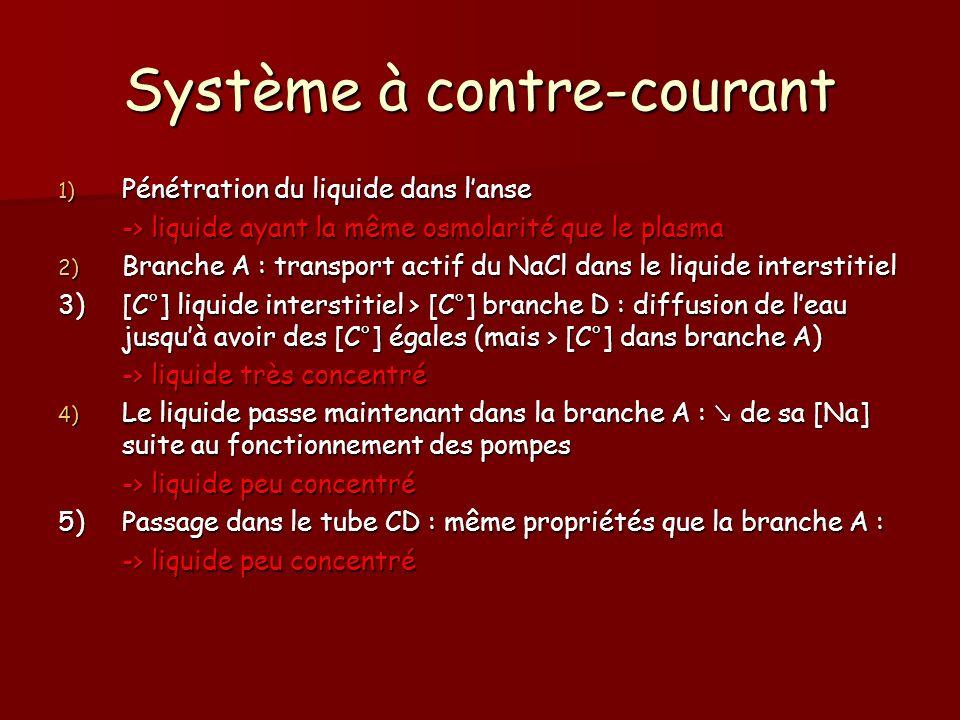 Système à contre-courant 1) Pénétration du liquide dans lanse -> liquide ayant la même osmolarité que le plasma 2) Branche A : transport actif du NaCl