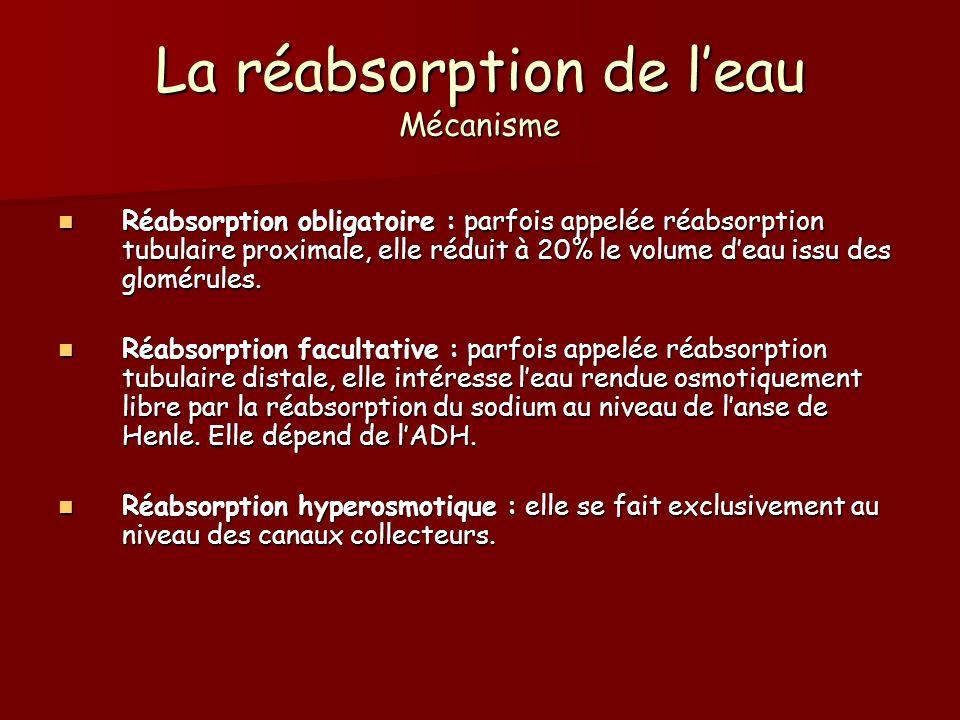 La réabsorption de leau Mécanisme Réabsorption obligatoire : parfois appelée réabsorption tubulaire proximale, elle réduit à 20% le volume deau issu d