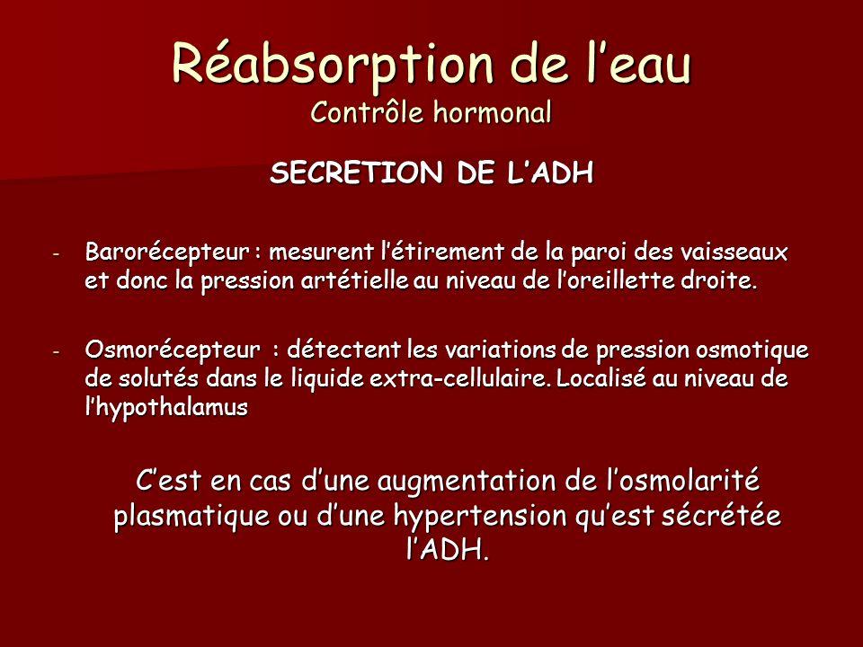 Réabsorption de leau Contrôle hormonal SECRETION DE LADH - Barorécepteur : mesurent létirement de la paroi des vaisseaux et donc la pression artétiell