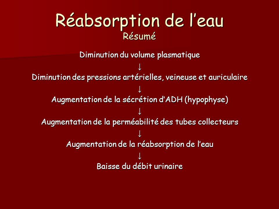 Réabsorption de leau Résumé Diminution du volume plasmatique Diminution des pressions artérielles, veineuse et auriculaire Augmentation de la sécrétio