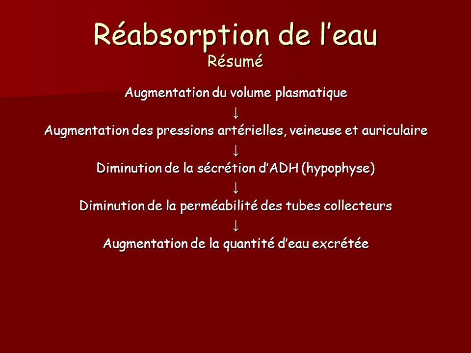 Réabsorption de leau Résumé Augmentation du volume plasmatique Augmentation des pressions artérielles, veineuse et auriculaire Diminution de la sécrét