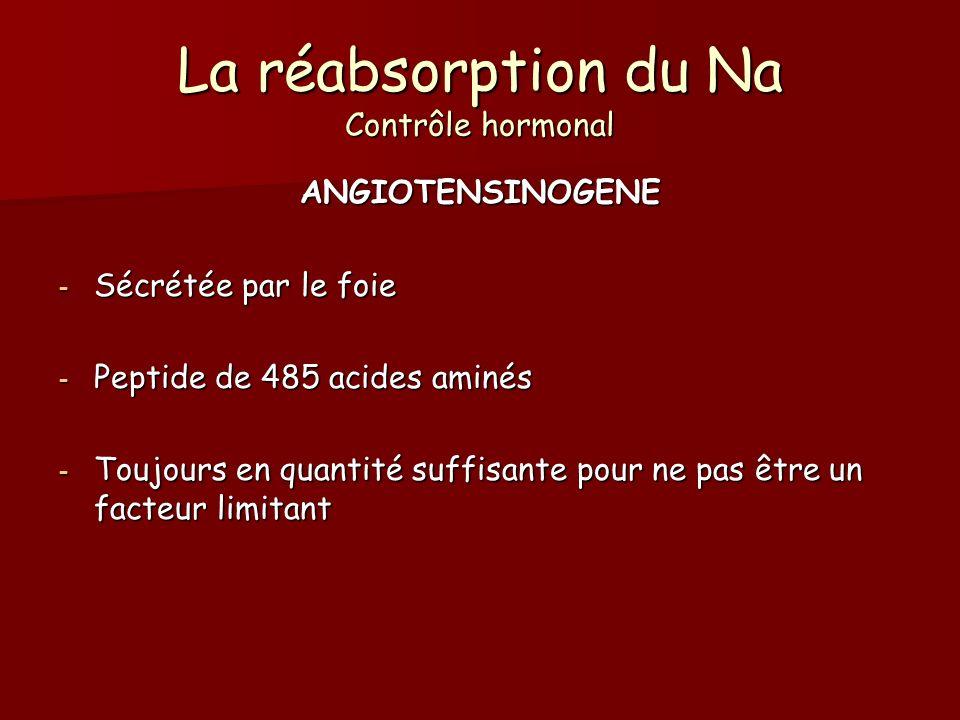 ANGIOTENSINOGENE - Sécrétée par le foie - Peptide de 485 acides aminés - Toujours en quantité suffisante pour ne pas être un facteur limitant