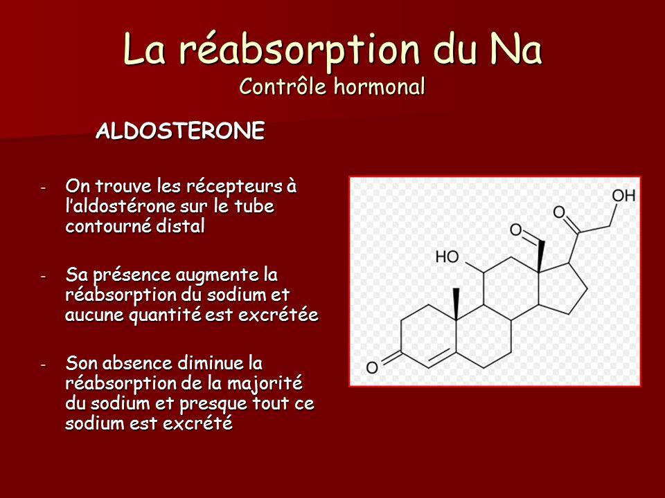La réabsorption du Na Contrôle hormonal ALDOSTERONE - On trouve les récepteurs à laldostérone sur le tube contourné distal - Sa présence augmente la r