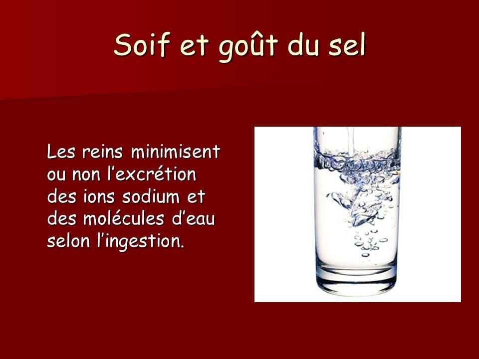 Soif et goût du sel Les reins minimisent ou non lexcrétion des ions sodium et des molécules deau selon lingestion.