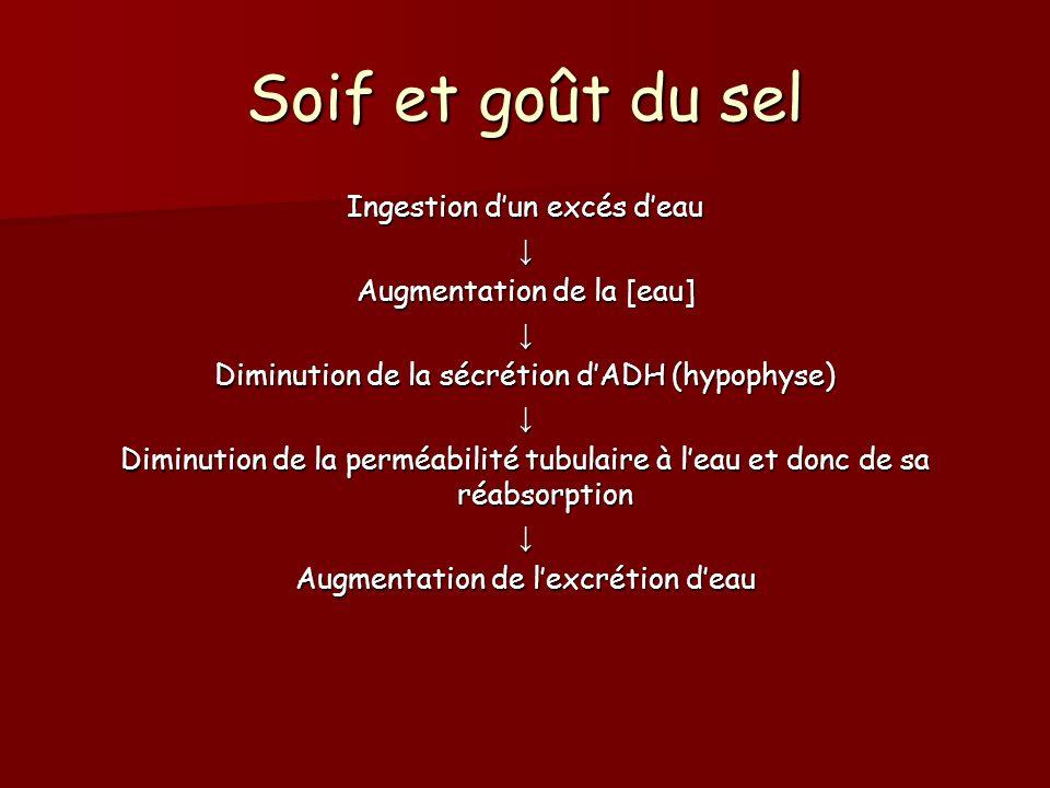 Soif et goût du sel Ingestion dun excés deau Augmentation de la [eau] Diminution de la sécrétion dADH (hypophyse) Diminution de la perméabilité tubula