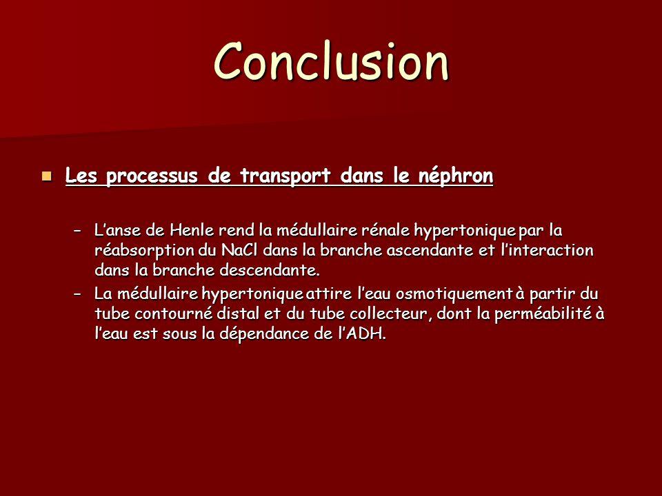 Conclusion Les processus de transport dans le néphron Les processus de transport dans le néphron –Lanse de Henle rend la médullaire rénale hypertoniqu