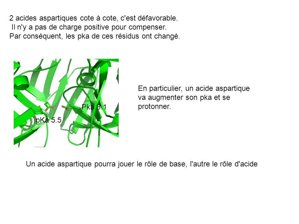 2 acides aspartiques cote à cote, c'est défavorable. Il n'y a pas de charge positive pour compenser. Par conséquent, les pka de ces résidus ont changé