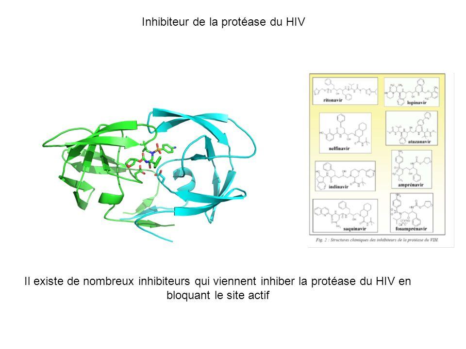 Inhibiteur de la protéase du HIV Il existe de nombreux inhibiteurs qui viennent inhiber la protéase du HIV en bloquant le site actif