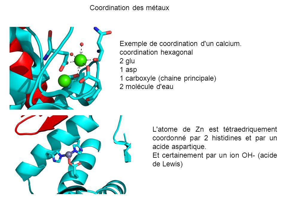 L'atome de Zn est tétraedriquement coordonné par 2 histidines et par un acide aspartique. Et certainement par un ion OH- (acide de Lewis) Exemple de c