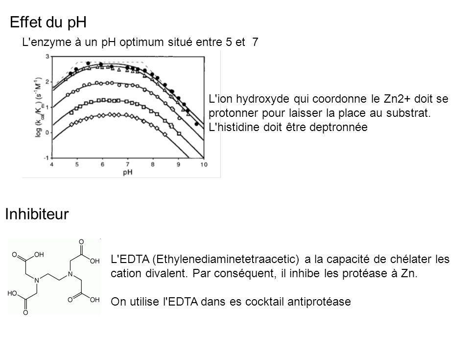 L'enzyme à un pH optimum situé entre 5 et 7 L'ion hydroxyde qui coordonne le Zn2+ doit se protonner pour laisser la place au substrat. L'histidine doi