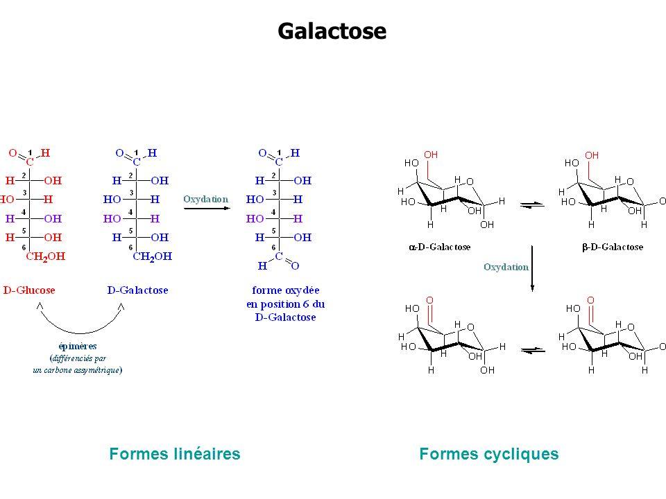 Galactose Formes linéaires Formes cycliques