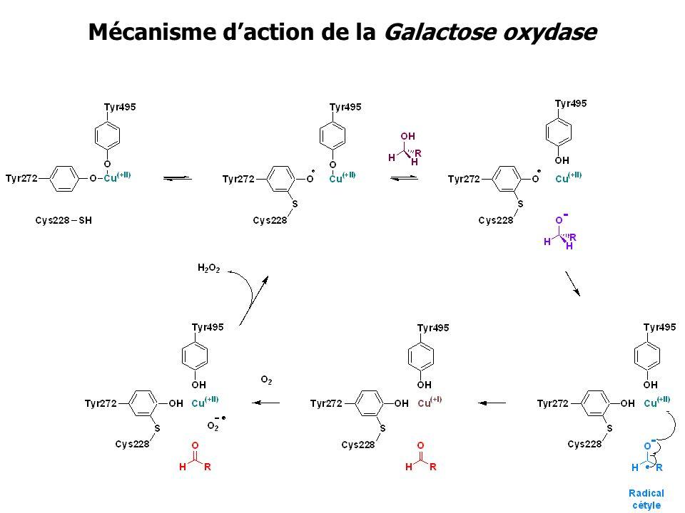 Mécanisme daction de la Galactose oxydase